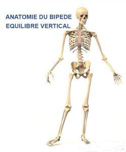squelette cavalier