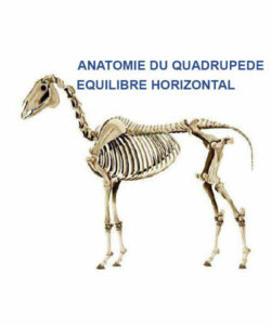 squelette de cheval