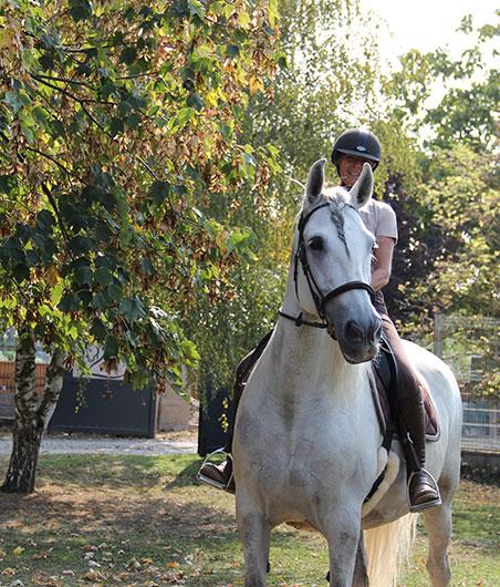 ergonomie, équitation